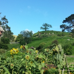 Hobbiton et les grottes de Waitomo