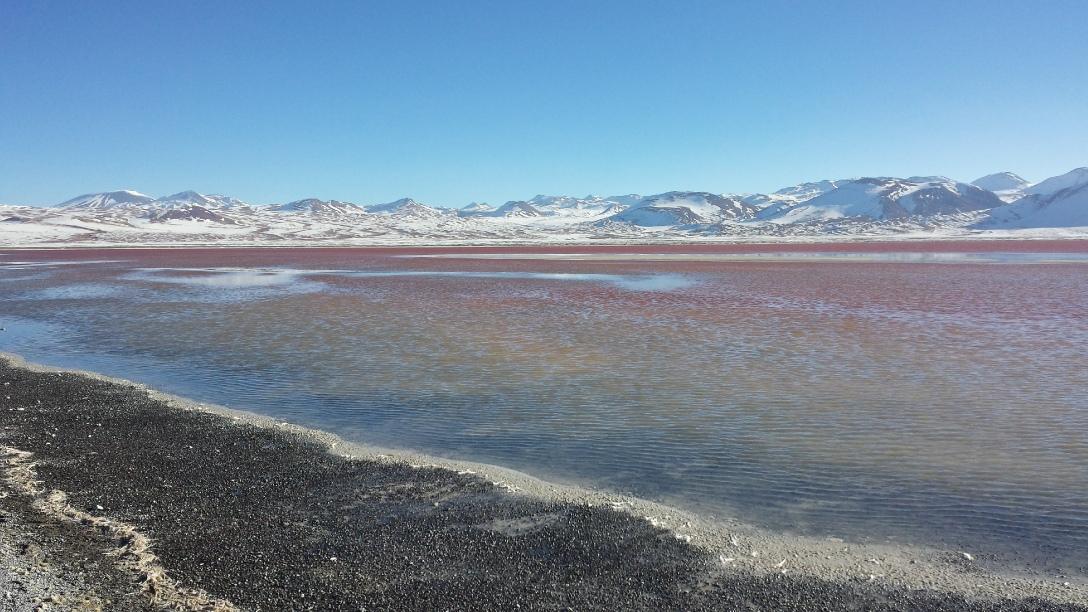 Laguna Colorada au Sud Lipez