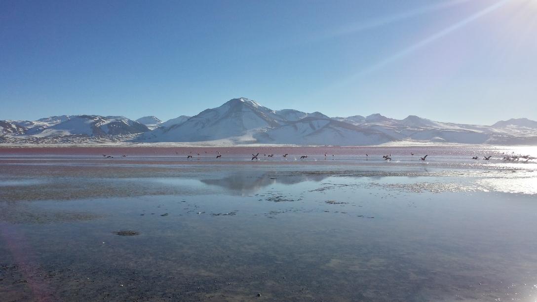 Laguna colorada et ses flamands roses au Sud Lipez