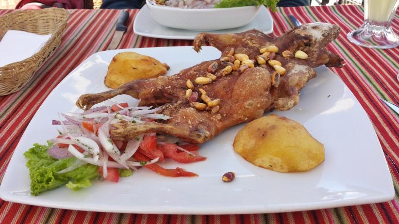 Le cuy (cochon d'Inde)