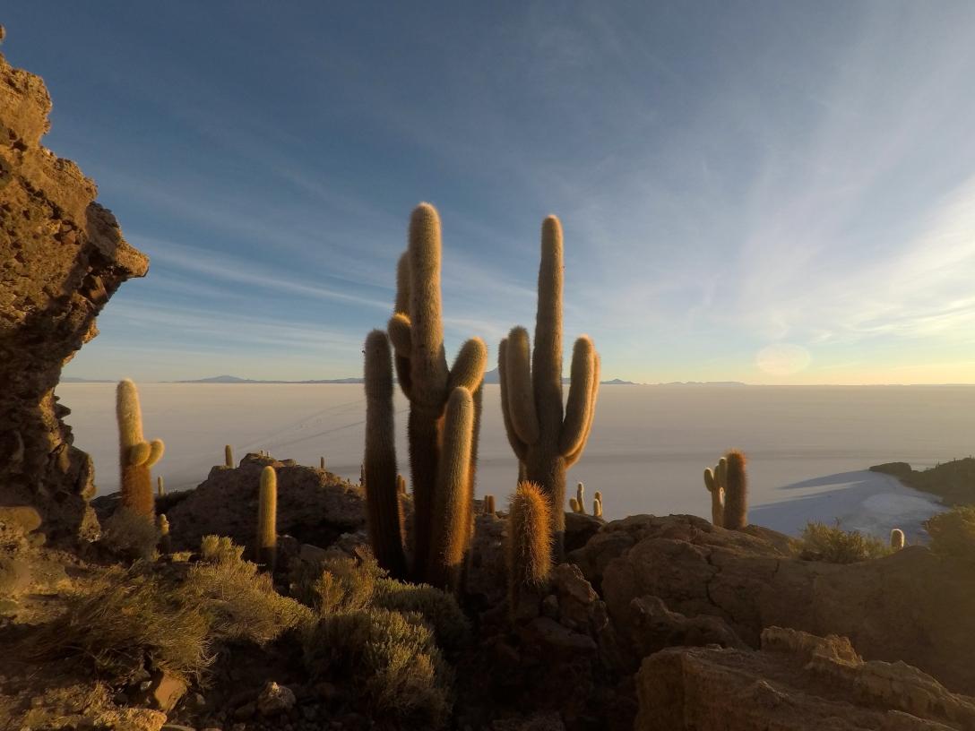 Cactus sur l'isla Incahuasi