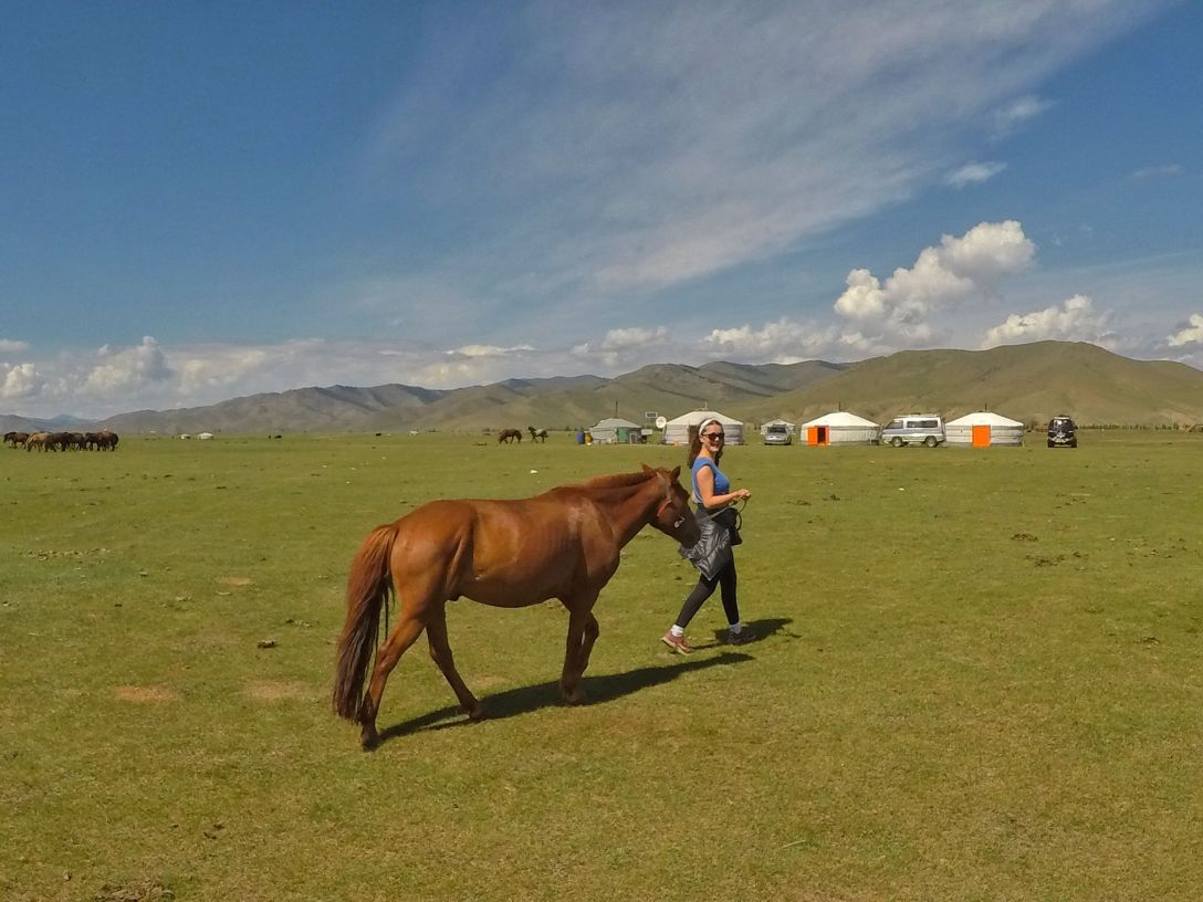 cheval_mongolie