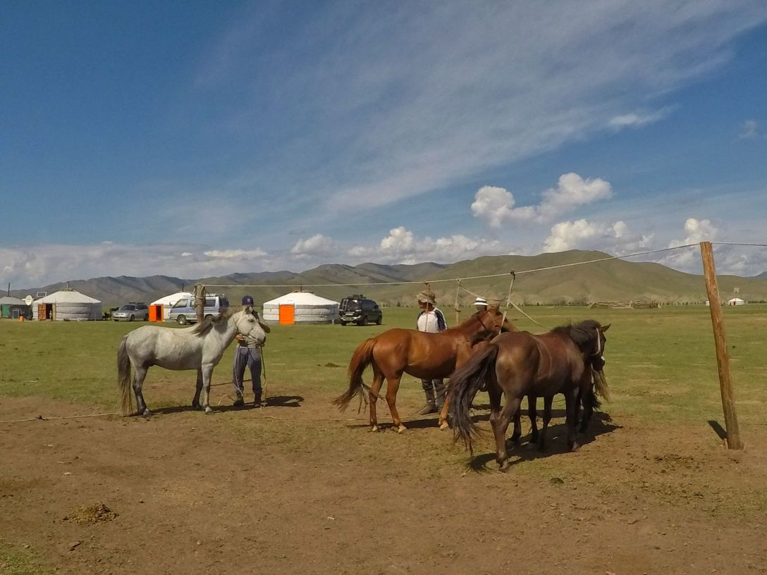 chevaux_mongolie