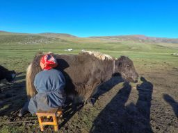 Visa pour la Mongolie à Moscou ou Irkoutsk