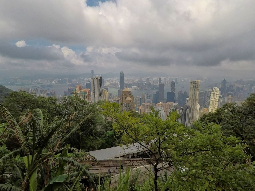 hong_kong_skyline_forest