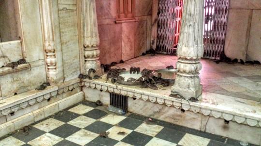 Temple des rats de Deshnoke