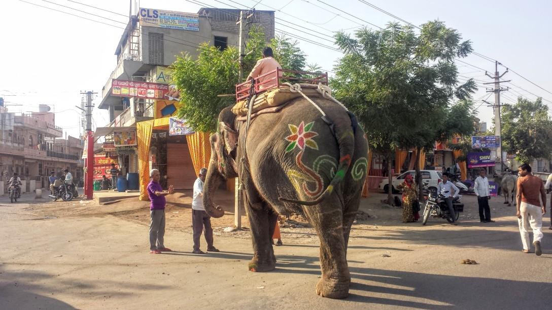 elephant_inde