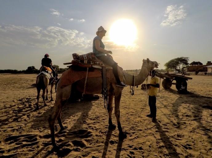 A dos de dromadaire dans le désert