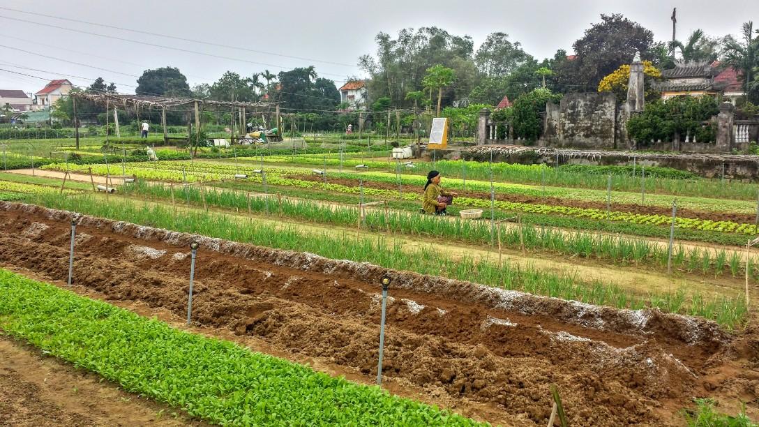 tra_que_vegetable_village