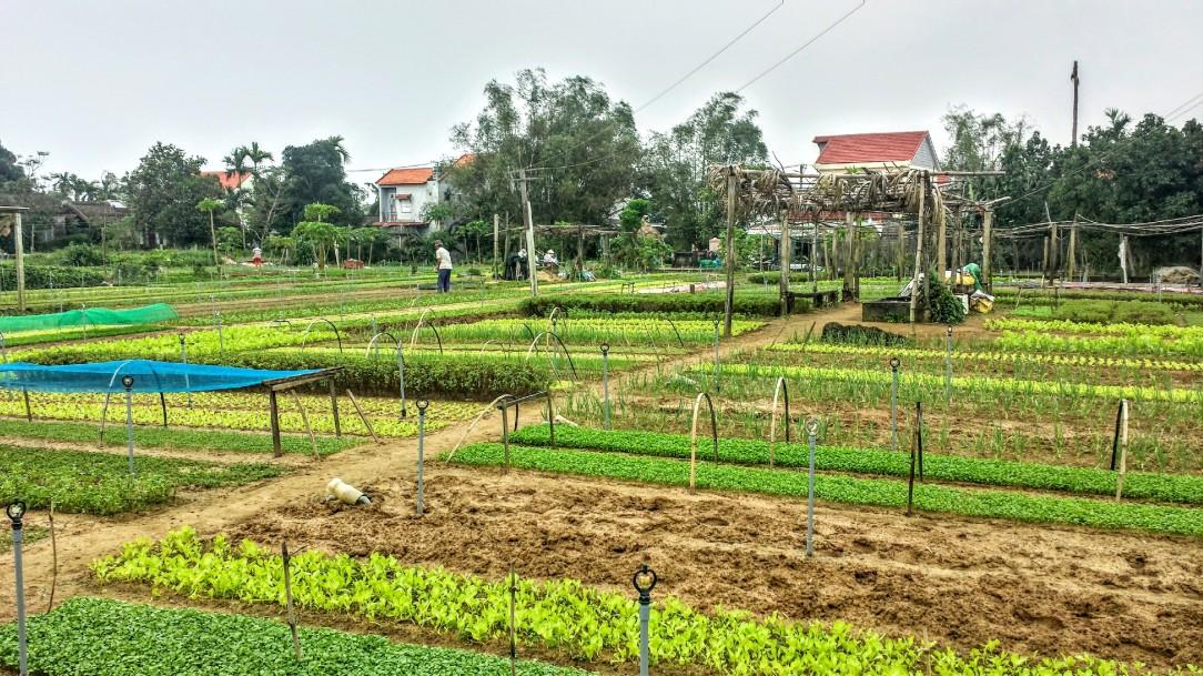 Village d'agriculteurs bio de Tra Que